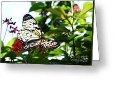 Light And Butterfly Greeting Card