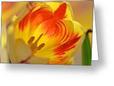 Light And Shade Greeting Card