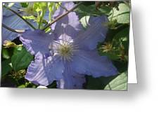 Light Blue Clematis Greeting Card
