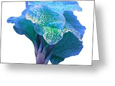 Light Blue Iris Greeting Card