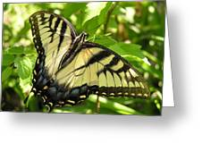 Light Form Female Tiger Swallowtail Greeting Card