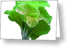 Light Green Iris Greeting Card