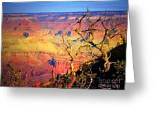 Light In The Canyon Greeting Card
