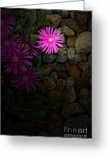 Light In The Rock Garden Greeting Card