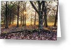 Light In The Trees Greeting Card