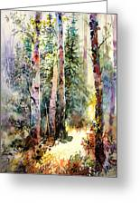 Light In The Woods Greeting Card
