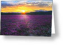Light Just Right Greeting Card