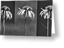 Light Of Day In Black And White Greeting Card