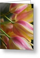 Light Of Spring Greeting Card