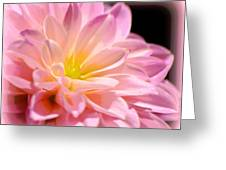 Light Pink Dahlia 1 Greeting Card