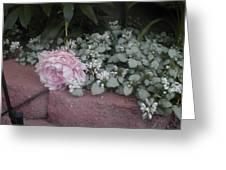 Light  Pink  Peonies Greeting Card