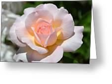 Light Pink Rose Greeting Card