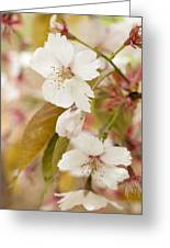 Light Pink Spring Blossom Greeting Card