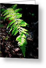 Light Play On Fern Greeting Card