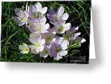 Light Purple Crocus Flowers In Spring Greeting Card
