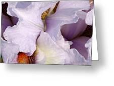 Light Purple Irises 2 Greeting Card