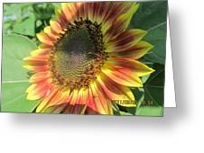 Light-shade Sunflower Greeting Card
