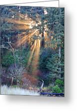 Light Shine Greeting Card