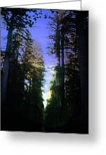 Light Through The Forest Greeting Card