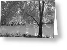 Light Tree Greeting Card