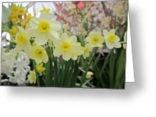 Light Yellow Daffodils Greeting Card