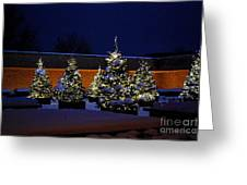 Lighted Trees With Snow Greeting Card