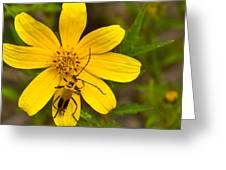 Lightning Bug On Flower Greeting Card