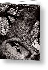 Lightning Tree  Greeting Card by Trish Mistric