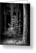 Lightpainting The Pine Forest New Growth Greeting Card by Dirk Ercken