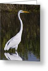 Like A Great Egret Monument Greeting Card
