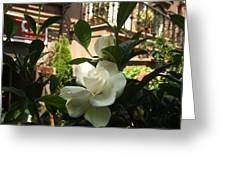 Like A Rose Greeting Card