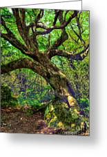 Likin Lichen - Blue Ridge Mountains Greeting Card