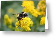 Lil Bee Greeting Card