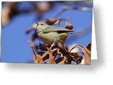 Lil' Bit - Orange-crowned Warbler Greeting Card