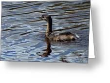 Lil Duck Greeting Card by Rhonda Humphreys