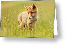 Lil' Hunter - Red Fox Cub Greeting Card