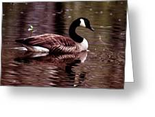 Lila Queen Of The Pond Greeting Card
