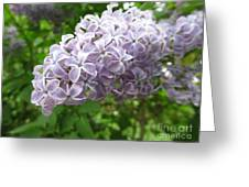 Lilac 1 Greeting Card