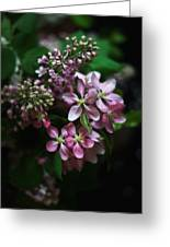 Lilac And Crabapple Greeting Card