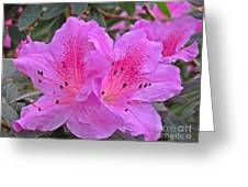 Lilac Azalea Greeting Card