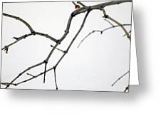 Lilac Branches Greeting Card