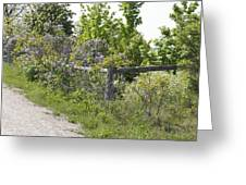 Lilac Fence I Greeting Card