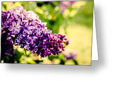 Lilac Festival Greeting Card