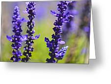 Lilac Heaven Greeting Card