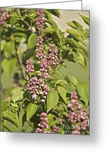Lilac In Spring Greeting Card