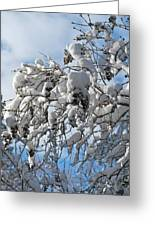 Lilac In Winter Greeting Card