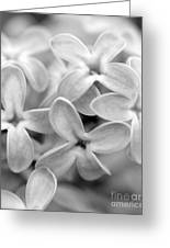 Lilac Macro Greeting Card