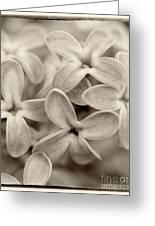 Lilac Macro Sepia Tone Greeting Card