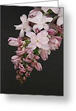 Lilac On Black Greeting Card