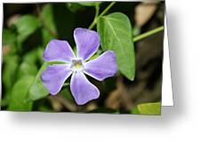 Lilac Periwinkle Greeting Card